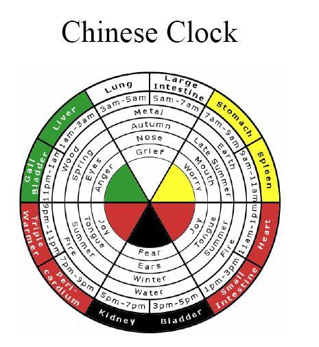body-clock-1